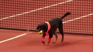 tennislab